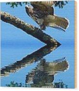 Falcon Reflect Wood Print