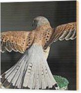 Falcon- Wings Spread Wood Print