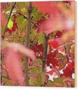 Fall 08-007 Wood Print
