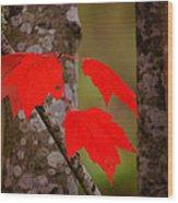 Fall Aflame Wood Print