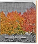 Fall At The Mann Wood Print