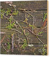 Fall Background Wood Print