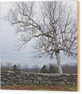 Fall Birch Wood Print
