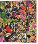 Fall Blueberry Bush Wood Print