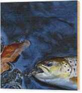 Fall Brown Trout Wood Print