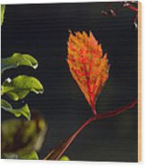 Fall Color 2 Wood Print