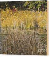Fall Color At Banff Spring Basin Wood Print