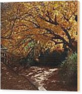 Fall Color Path Wood Print