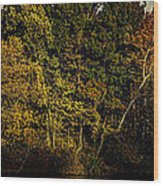 Fall Color Trees V8 Pano Wood Print