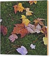 Fall Colored Leaves Wood Print