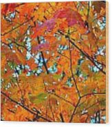 Fall Colors 2014-5 Wood Print