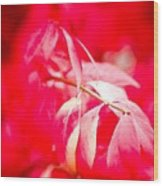 Fall Colors 6669 Wood Print