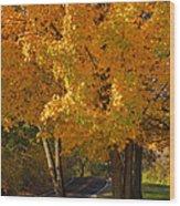 Fall Colors Wood Print by Adam Romanowicz