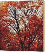 Fall Colors Cape May Nj Wood Print