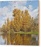 Fall Colors Clouds And Western Gulls Reflected In A Pond Wood Print