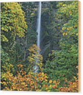 Fall Colors Frame Multnomah Falls Columbia River Gorge Oregon Wood Print