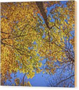 Fall Colors In The Sky  Wood Print