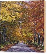 Fall Colors Near Sister Bay Wood Print