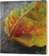Fall Colors On A Downed Aspen Leaf Wood Print