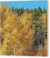 Fall Colors On The Colorado Aspen Trees Wood Print