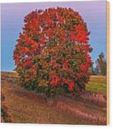 Fall Colors Over A Big Tree In Warmia In Poland During Twilight Hour Wood Print