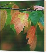 Fall Comes Wood Print