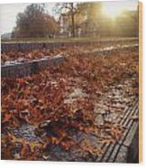 Fall Comes To Portland Wood Print