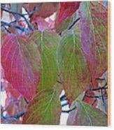 Fall Dogwood Leaf Colors 1 Wood Print