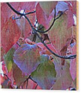 Fall Dogwood Leaf Colors 2 Wood Print