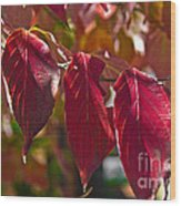 Fall Dogwood Leaves Wood Print
