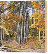 Fall Driveway And Coco The Dog Wood Print