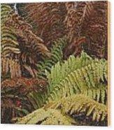Fall Ferns Acadia National Park Img 6355 Wood Print