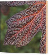Fall Foliage 4 Wood Print