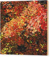 Fall Foliage Colors 21 Wood Print