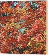 Fall Foliage Colors 22 Wood Print
