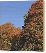 Fall Foliage In The Arboretum Wood Print