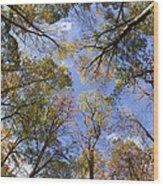 Fall Foliage - Look Up 2 Wood Print