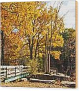 Fall Foliage Vi Wood Print