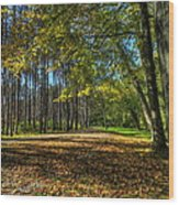 Fall Folliage Stroll Wood Print