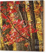 Fall Forest Detail Wood Print