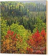 Fall Forest Rain Storm Wood Print by Elena Elisseeva
