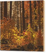 Fall Forest  Wood Print