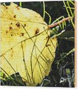 Fall Frost Wood Print