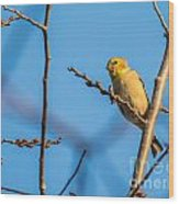 Fall Goldfinch Wood Print