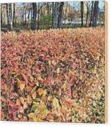 Fall Hedge Wood Print