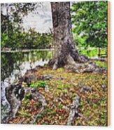 Fall In Audubon Park Wood Print by Ray Devlin