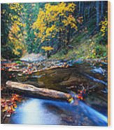 Fall In Bulgarian Forest  Wood Print
