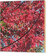 Fall In Illinois Wood Print