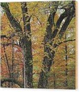 Fall In Kentucky Wood Print