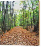 Fall In New England Wood Print by Stephen Melcher